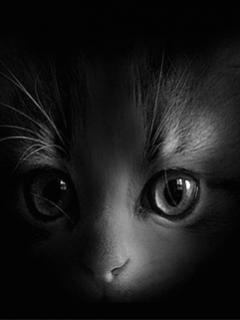 Darmowe Tapety Na Telefon Komórkę Czarny Kot Toptapetypl