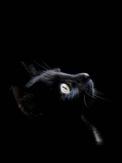 Tapety Ze Zwierzętami Koty Darmowe Tapety Na Telefon Komórkę