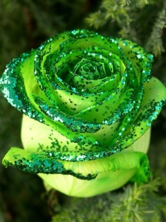 Tapety Z Kwiatami   R    E