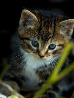 Darmowe Tapety Na Telefon Komórkę Kot Na Trawie Toptapetypl